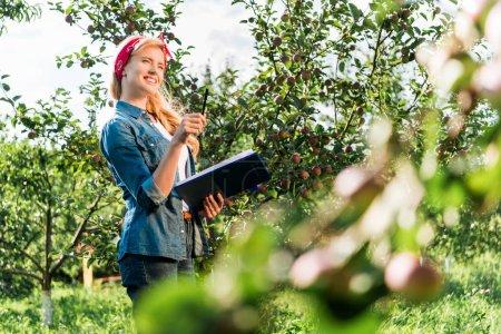 attractive farmer checking harvest in apple garden at farm