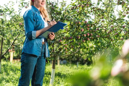 cropped image of farmer holding clipboard in apple garden at farm
