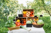ripe appetizing ecological vegetables in boxes on market stall