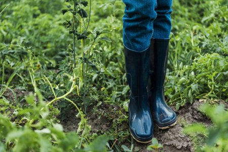 cropped image of farmer standing in rubber boots in field