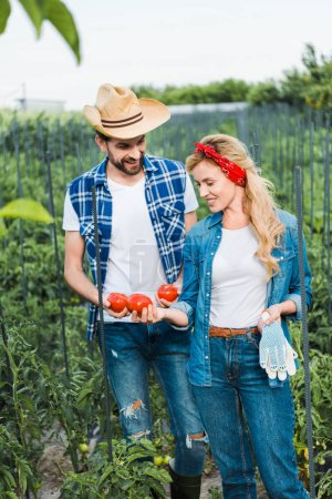 couple of farmers looking at ripe tomatoes in field at farm