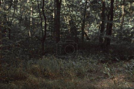 Photo pour Vue de la texture de la sombre forêt verte - image libre de droit