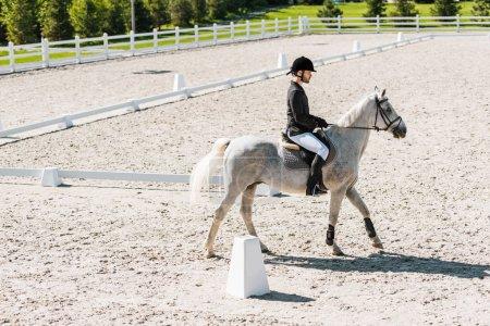Photo pour Vue latérale du cheval blanc beau mâle équitation équestre au ranch - image libre de droit