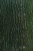 close-up view of cracked green tree bark background