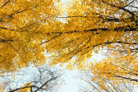 Photo for Bottom view of beautiful autumnal forest with yellow trees - Royalty Free Image