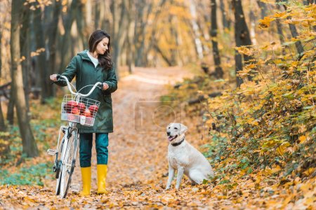 young woman carrying bicycle with basket full of apples and her dog walking near on yellow leafy path in autumnal forest
