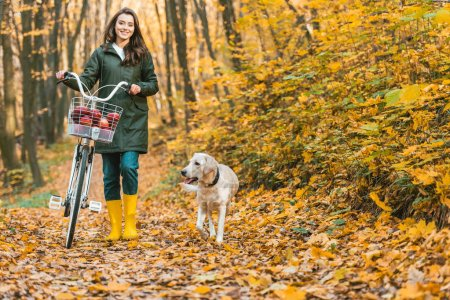 cheerful girl carrying bicycle with basket full of apples and her dog walking near on yellow leafy path in autumnal forest
