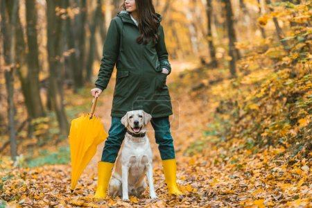 cute golden retriever sitting between legs of woman in rubber boots with yellow umbrella in autumnal forest