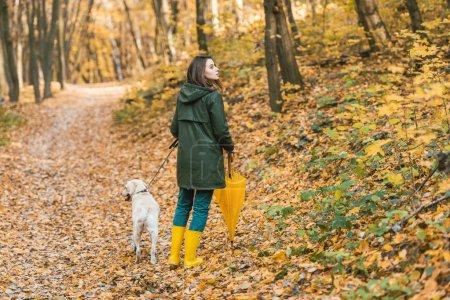 Photo pour Belle femme en bottes de caoutchouc avec parapluie jaune et marcher avec chien sur chemin de feuillus en forêt automnale - image libre de droit