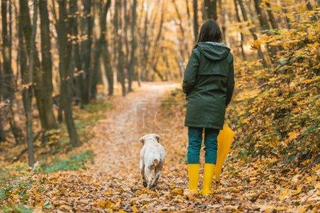 Photo pour Vue arrière du femme en bottes de caoutchouc avec parapluie jaune et marcher avec chien sur chemin de feuillus en forêt automnale - image libre de droit