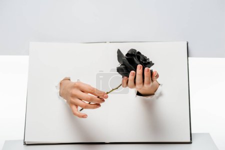 cropped shot of woman holding black rose flower through holes on white