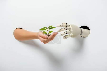 cropped image of woman and robot holding green plant through holes on white