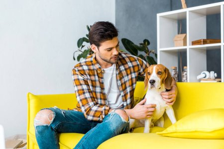 handsome man in checkered shirt spending time with beagle on sofa