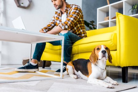 Photo for Selective focus of beagle dog and man with laptop - Royalty Free Image