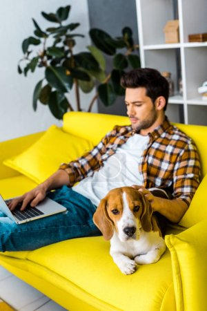 cute beagle dog and man with laptop on sofa in living room