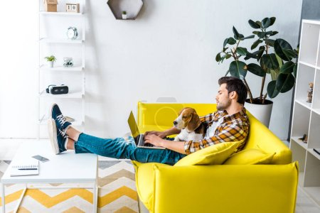 Photo for Handsome man using laptop on yellow sofa with beagle dog in living room - Royalty Free Image