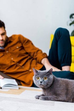 selective focus of grey british shorthair cat and man with book on floor