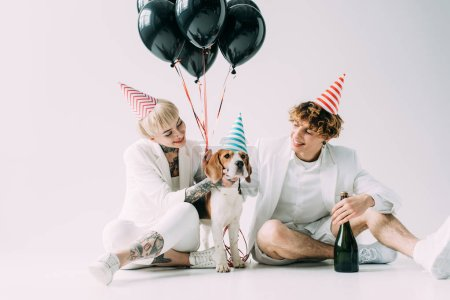 Photo for Cheerful couple sitting near beagle dog with balloons and bottle of champagne on grey background - Royalty Free Image