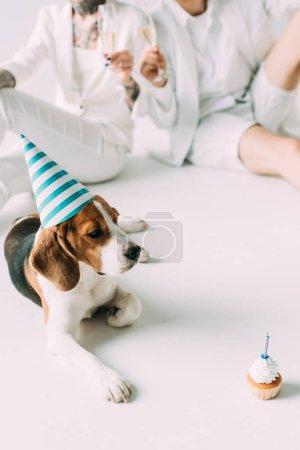 Photo pour Mise au point sélective de chien beagle mignon dans cap parti regardant cupcake près de quelques verres de champagne sur fond gris - image libre de droit