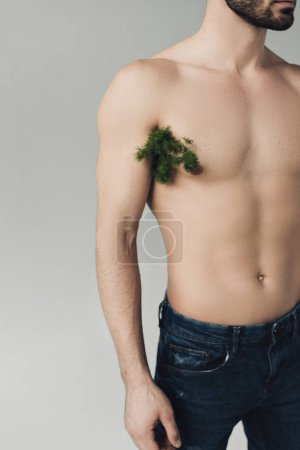 Photo for Cropped view of bearded man with plant under armpit isolated on grey - Royalty Free Image