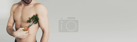 Photo for Panoramic shot of shirtless man cutting plant on armpit with scissors isolated on grey - Royalty Free Image