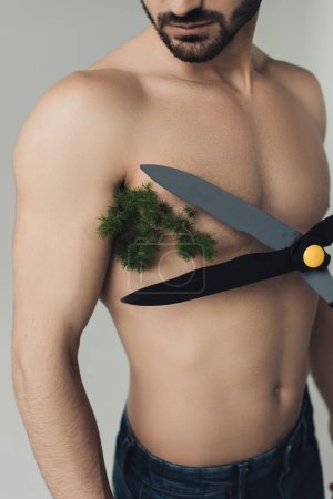 Photo for Partial view of shirtless man with plant under armpit and big scissors isolated on grey - Royalty Free Image