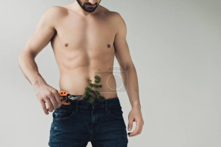 Photo for Partial shot of bearded shirtless man with plant in pants holding secateurs isolated on grey - Royalty Free Image
