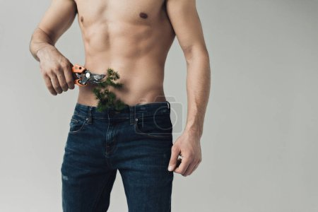 Photo for Cropped view of shirtless man cutting plant in pants with secateurs isolated on grey - Royalty Free Image