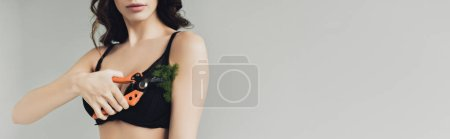 Photo for Panoramic shot of woman cutting plant on armpit with secateurs isolated on grey - Royalty Free Image