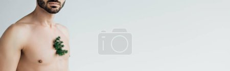 Photo for Panoramic shot of of bearded man with green plant on chest isolated on grey - Royalty Free Image