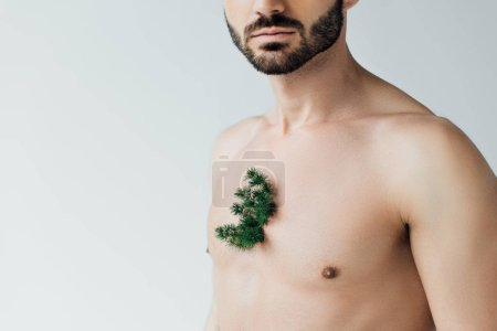 Photo for Partial view of bearded man with green plant on chest isolated on grey - Royalty Free Image