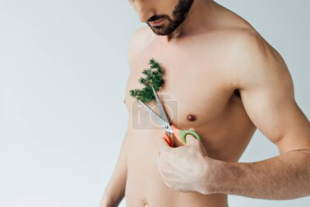 Photo for Partial view of bearded man cutting plant on chest with scissors isolated on grey - Royalty Free Image