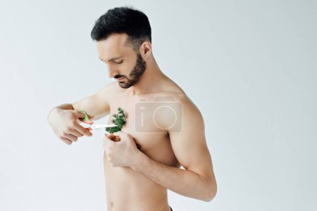 Photo for Handsome bearded man cutting plant on chest with scissors isolated on grey - Royalty Free Image