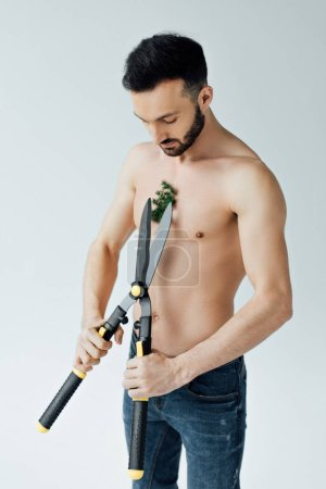 Photo for Shirtless man in jeans cutting plant on chest with big scissors isolated on grey - Royalty Free Image