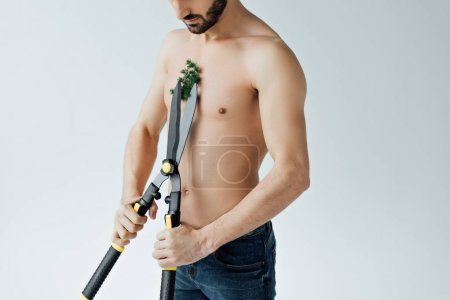 Photo for Cropped view of shirtless man in jeans cutting plant on chest with big scissors isolated on grey - Royalty Free Image