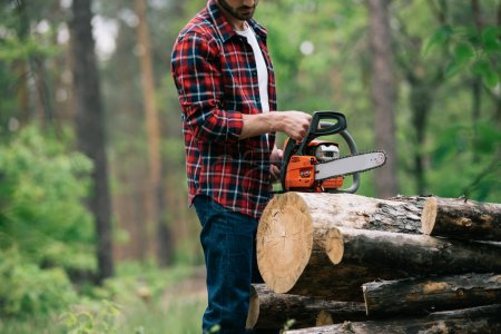 Photo for Cropped view of lumberjack cutting round timbers with chainsaw in forest - Royalty Free Image