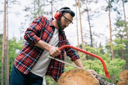 Photo pour Bûcheron attentif dans les cache-oreilles coupe rondin avec scie à arc en forêt - image libre de droit