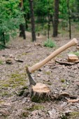 sharp ax with long wooden handle on wood stump in forest