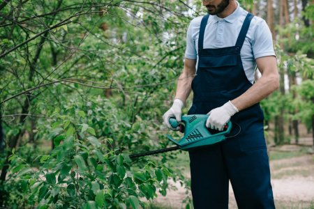 Photo for Partial view of gardener trimming bushes with electric pruner - Royalty Free Image