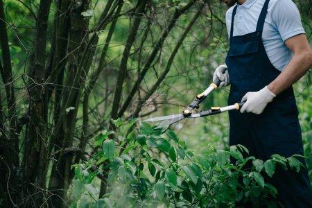 Photo pour Vue recadrée des buissons de coupe de jardinier avec le parure dans le stationnement - image libre de droit