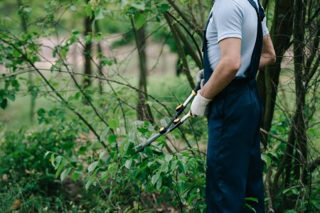 Photo for Cropped view of gardener in overalls cutting bushes with trimmer in garden - Royalty Free Image