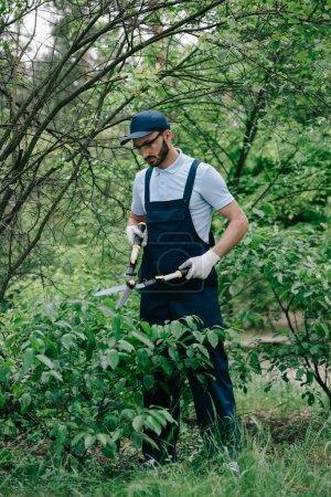Photo pour Jardinier attentif dans des salopettes et des buissons de coupe de chapeau avec le tailleur dans le stationnement - image libre de droit