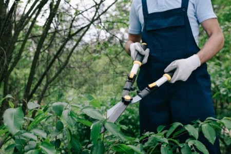 Photo for Partial view of gardener in overalls trimming bushes with pruner in park - Royalty Free Image