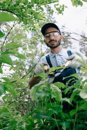 Photo pour Foyer sélectif du jardinier de sourire dans des verres protecteurs coupant des buissons avec le trimmer dans le stationnement - image libre de droit