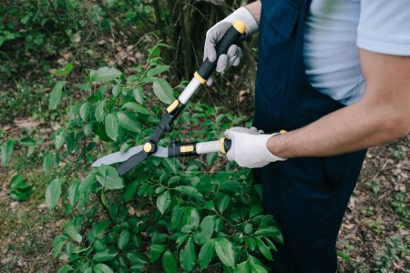 Photo for Cropped view of gardener in overalls cutting bushes with trimmer in park - Royalty Free Image
