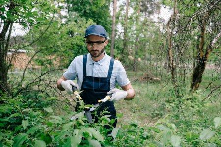 Photo pour Beau jardinier dans des verres protecteurs et des arbustes de coupe de salopette avec le tailleur dans le stationnement - image libre de droit