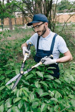 Photo pour Jardinier de sourire dans des glaces protectrices coupant des buissons avec le tailleur dans le stationnement - image libre de droit