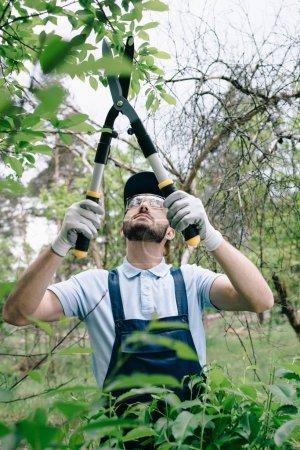 Photo pour Foyer sélectif du jardinier attentif dans des verres protecteurs et des buissons de coupe de chapeau avec le tailleur dans le stationnement - image libre de droit