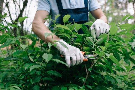 Photo for Cropped view of gardener in gloves pruning bush with trimmer in garden - Royalty Free Image