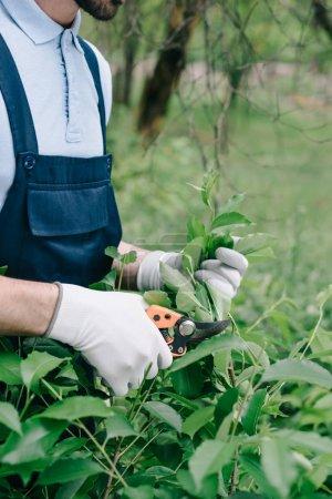 Foto de Vista parcial del jardinero en monos y guantes de recorte de arbusto con podador en el jardín - Imagen libre de derechos